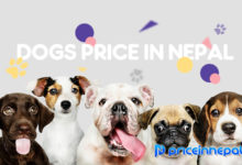 Dogs-Price-in-Nepal